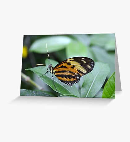 Orange, Yellow and Black Butterfly Greeting Card