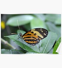 Orange, Yellow and Black Butterfly Poster