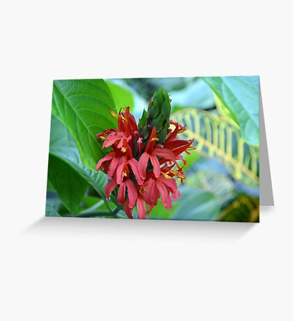 Red Tropical Flower  Greeting Card