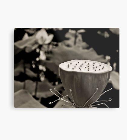 Black and White Lotus Seed Pod Metal Print
