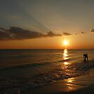 Ocean Sunset by Amy Herrfurth