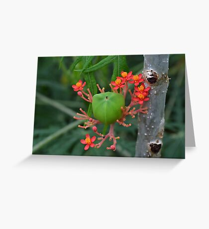 Little Flowers with Green Pod Greeting Card