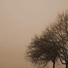 Winter Trees by Luke Stephensen