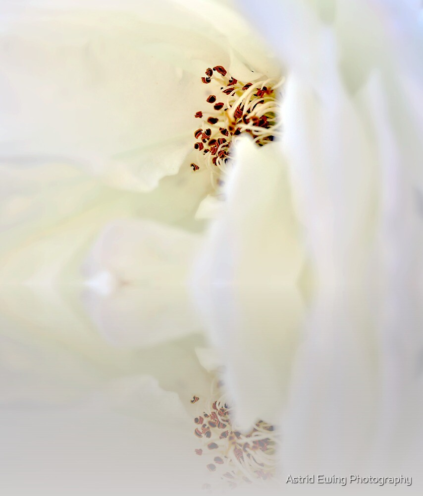 Reflecting on softness by Astrid Ewing Photography