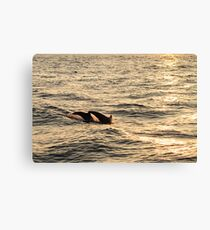 sunset diving Canvas Print