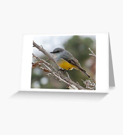 Western yellow Robin Greeting Card