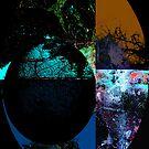 Cuspisce Creel by Greg Owens