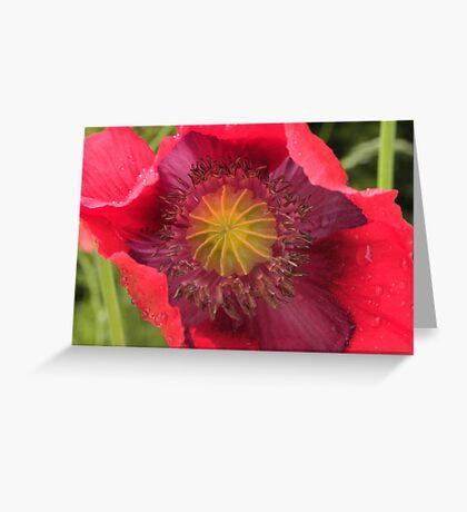 Wild Poppy-Pink/Purple Greeting Card