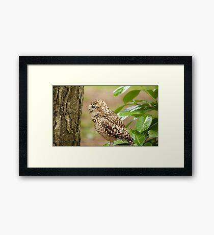 Birds of Prey Series No 10 Framed Print