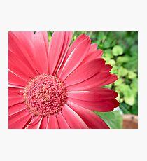 macro pink flower -defocussed green background Photographic Print