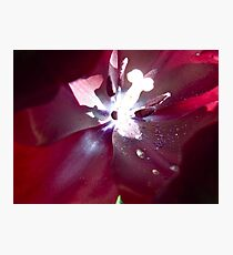crimson flower macro with flared stamen Photographic Print