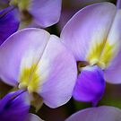 Petal coupling by mikeosbornphoto