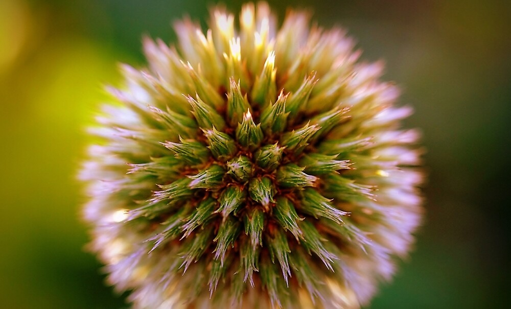 Burst of life by mikeosbornphoto