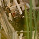 Sneak View of Black Bird Feeding by David Friederich