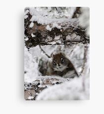 Chilly Chipmonk Canvas Print