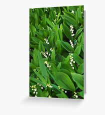 lily of the valley macro Greeting Card