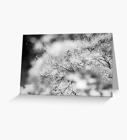 Reflection after Rain Greeting Card