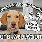 Playful Photogenic Top 10 Banner by LTDesignStudio