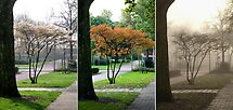 Little Tree... Seasons Change - triptych by steppeland