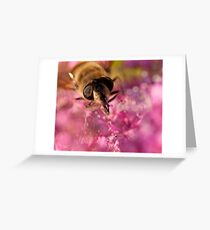 Honey Bee macro Greeting Card
