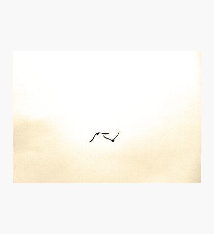 Ravens Flying Together Photographic Print