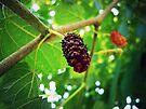 Mulberries  by FrankieCat