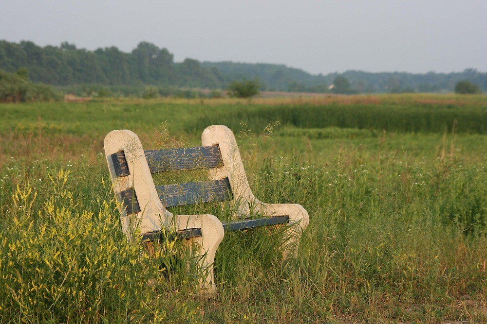 Empty bench in the Limberlost by skyoncloud9
