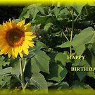 Sunflower by DebbieCHayes