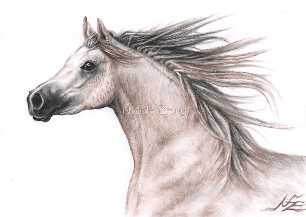 Arabian Stallion by Nicole Zeug