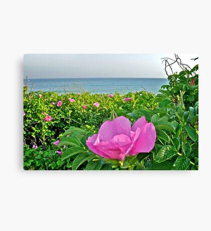 Beach Plum Blossom at Matunuck Beach - Rhode Island Canvas Print