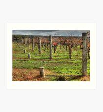 A Frankland Vineyard Art Print