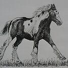 Gypsy Cob Foal by louisegreen