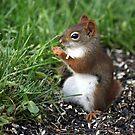 Little Red Enjoying Breakfast by Renee Blake