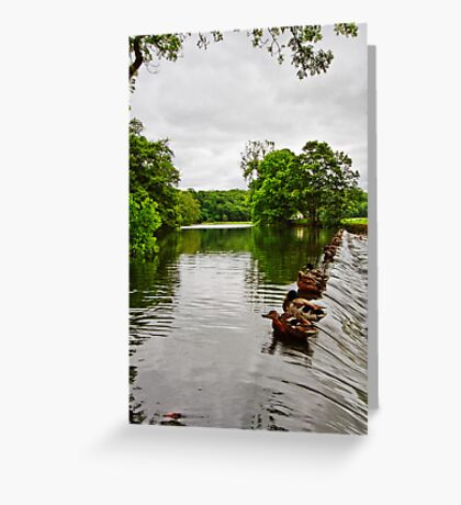 The Weir at Whalley Greeting Card