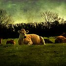 Lazing on a Sunday Afternoon by moor2sea