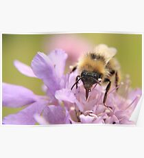 Busy busy Bumble Bee Poster