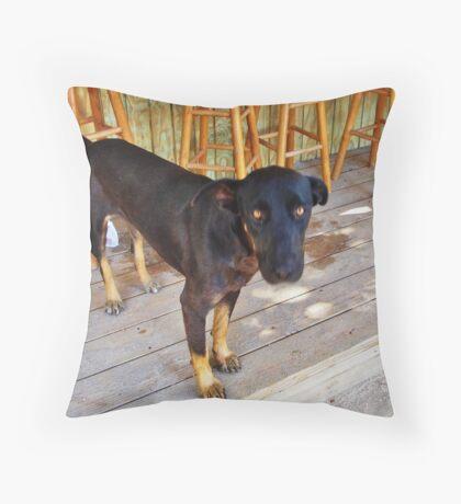 Lion Paw the Beach Dog Throw Pillow