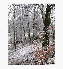 Snow on autumn leaves Photographic Print