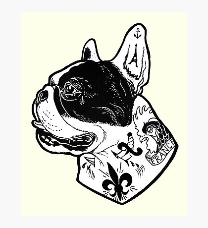 Tattooed French Bulldog Photographic Print