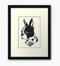 Tattooed Boston Terrier  Framed Print