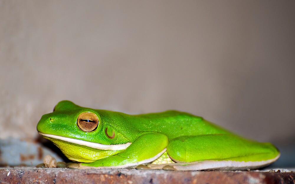 Green Tree Frog by Jenny Dean
