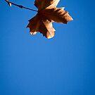 leafing me feeling blue by Hege Nolan
