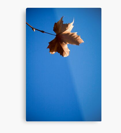 leafing me feeling blue Metal Print
