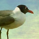 Laughing Gull by Tibby Steedly
