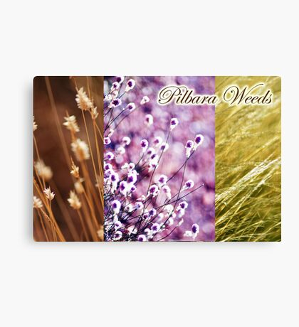 Pilbara Weeds Canvas Print