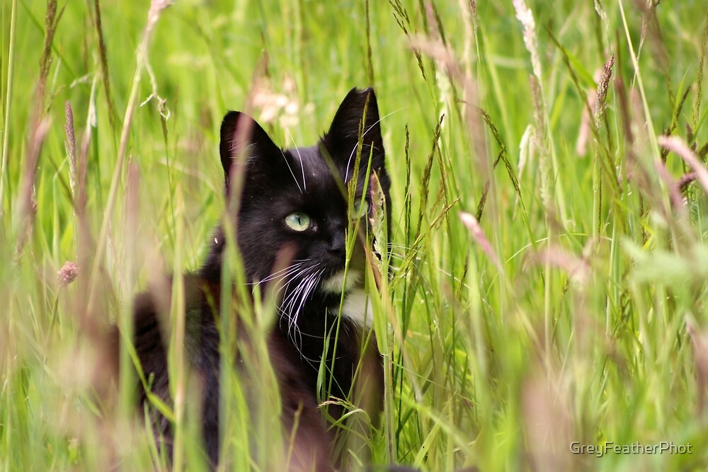 Cat in the Grass by GreyFeatherPhot