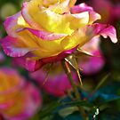 Art and Garden Might Rose by Nancy Stafford