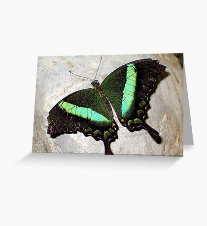 Green Banded Peacock Greeting Card