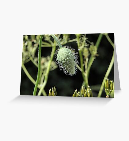 Seed Head-Just call me 'fluffy' Greeting Card