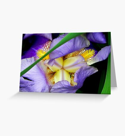 Center of Attention... ©  Greeting Card